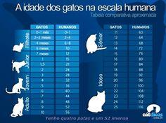 ACAPRA - Associação Brusquense de Proteção aos Animais: A idade dos gatos na escala humana