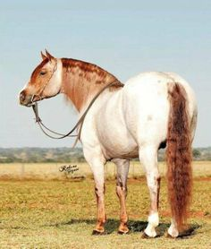 Wow. Not sure what color this horse is. Red roan? I don't know, but it's beautiful!