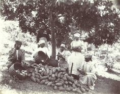 """Jamaica as it used to be - Telegraph.  The information on this image records the women involved as """"pulping chocolate"""" in Jamaica."""