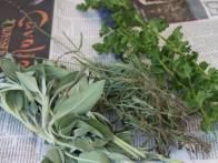 On newspaper, lay out your fresh herbs. Be sure that they do not have any water on their leaves, if so they will mold.
