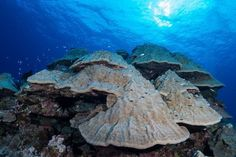 Hard Coral, Trip Advisor, Water, Outdoor, Beautiful, Gripe Water, Outdoors, Outdoor Games, The Great Outdoors