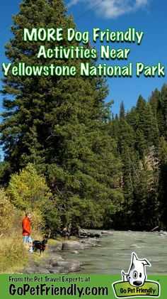 More dog friendly activities near Yellowstone National Park from the Pet Travel Experts at GoPetFriendly.com
