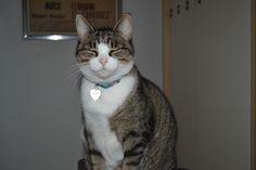 my grey cat Mimì!