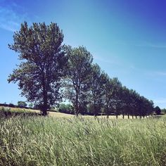 A beautiful sunny day today at @quantocklakesuk #summer #treelined #driveway #love #somerset #wedding #venue #blue #skies #haveitall #weddingday