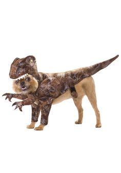 aahhhahaha. I wanna get this for Mr. Jibs... maybe its because that doggy model is a brussels griffon too.