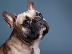 Male Horse Names: Best Stud, Colt, Gelding & Stallion Names – My Pet's Name French Dog Names, French Bulldog Names, Unique Cat Names, Unique Cats, Cat Puns, Cat Jokes, Funny Horse Names, Boston Terrier Names, Bunny Names
