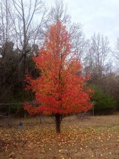 This beautiful tree is at our retreat in Ms.!!!!! So much lively color!!!!