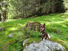 Chihuahua, Husky, Dogs, Animals, Animales, Animaux, Pet Dogs, Doggies, Animal