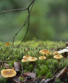 Mushrooms to Petgill | Flickr - Photo Sharing!