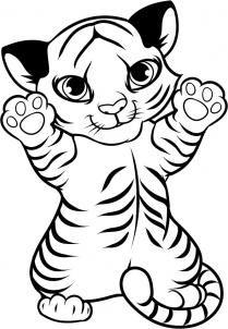 how to draw a tiger cub, tiger cub step 9
