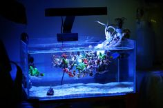 Click this image to show the full-size version. Glass Aquarium, Aquarium Design, Reef Aquarium, Saltwater Tank, Saltwater Aquarium, Reef Aquascaping, Reef Tanks, Fish Tanks, Tanked Aquariums
