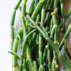 A SCOTTISH FEAST: 1598. They served saxifrage and samphire. A tun of bodreaux (£267 pounds); a ton of beir (a little more than £13 pounds); saffron @ 4s for half an ounce; and cinnamon 6s 8d. You pick samphire along the seashore in June and July and cook it like asparagus.
