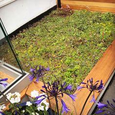 Living roof with Sedums Living Roofs, Bespoke Design, Planting, Garden Design, Landscape, Green, Flowers, Custom Design, Plants