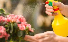Táto domáca zmes je naozaj účinná na vošky, mušky roztoče a iný savý hmyz. Stačia k tomu tri prísady ktoré má doma naozaj každý! Stačí zarobiť, naliať a postriekať. Tak poďme na to. Potrebujeme: 1/2 dc octu 1/2 dc olej polievková lyžica saponátu 700 ml teplej vody Postup: Voda by mala byť naozaj teplá aby … Homemade Insecticide, Bonsai, Baking Soda Benefits, Green Soap, Agriculture Biologique, Beautiful Flowers, Alcohol, Canning, Bug Spray Recipe