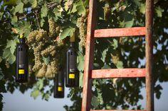 """""""un uomo, un sogno, il vino - Adarmando"""" - Tabarrini Montefalco #blog #Tabarrini #wine #whitewine"""