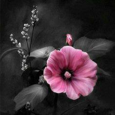pink flower,,,