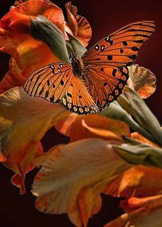 Orange butterfly perched on orange flowers. Beautiful Bugs, Beautiful Butterflies, Beautiful Flowers, Butterfly Kisses, Butterfly Flowers, Orange Butterfly, Monarch Butterfly, Butterfly Chrysalis, Black Flowers