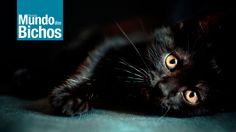 Essa história de dar azar é inveja ! www.facebook.com/RevistaMundodosBichos