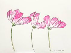 Flowers drawn with dip ink and ink wash Illustration Art, Flower Drawing, Art, Ink, Draw
