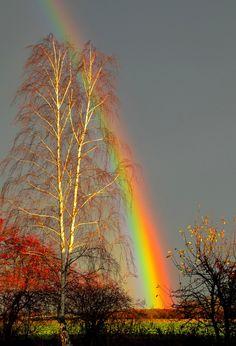 Regenbogen bei Sonnenuntegang von lutz golli