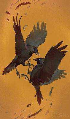 Fighting Jackdaws by CoyoteMange