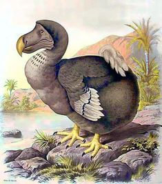 html - Animals Extinct Birds, Extinct Animals, Prehistoric Animals, Dinosaurs Extinction, Types Of Animals, Animal Species, Adventures In Wonderland, Nature Animals, Creature Design