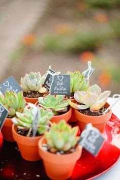 Suculentas... Nos encantan!  http://milejardin.com/ #floristeria #florist #Alcañiz | Succulents & Cream themed wedding //  mirelle carmichael photography