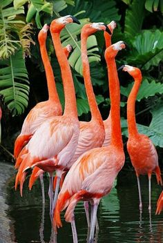 i just need to look at flamingos right now