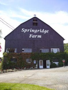 Visiting Springridge Farm