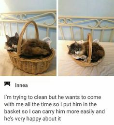 Beste 30 Humor Cat Quotes - Divertido M - Gatos Graciosos Cute Funny Animals, Funny Cute, Cute Cats, Pretty Cats, Hilarious, I Love Cats, Crazy Cats, Animals And Pets, Baby Animals