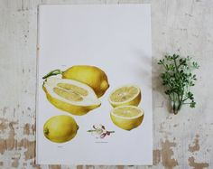 Love Vintage Botanical prints - Citron Lemons Book Plate  from shavingkitsuppplies