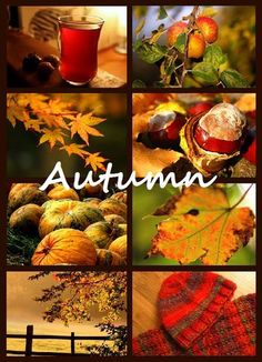 ♥ Autumn - Such A Beautiful Season ... My favorite!