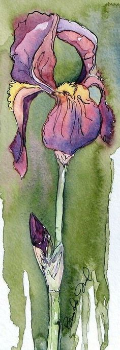 Purple Iris by Brenda Jiral - Purple Iris Painting - Purple Iris Fine Art Prints and Posters for Sale Pen And Watercolor, Watercolor Flowers, Watercolor Paintings, Watercolors, Tattoo Watercolor, Iris Painting, Painting & Drawing, Painting Flowers, Iris Drawing