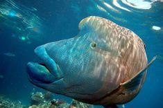 amazing creatures around the reef.