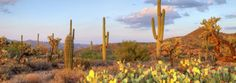 Chase away the winter blues with these warm #NationalParks -- Saguaro National Park | #FindYourPark #EncuentraTuParque