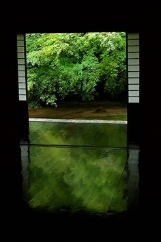 Japanese Room leaves reflecting on the floor in a subtle natural light