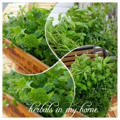 Herbals in my home