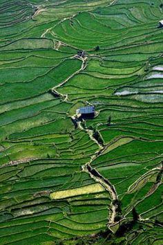 the Honghe Hani Rice Terraces are a patchwork of fresh green - Yunnnan