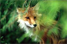 Tierfotografien sind sehr beliebt und weit verbreitet. Um das perfekte Bild abzupassen, müssen die Fotografen stets geduldig und ruhig sein, um das Tier nicht zu verschrecken.