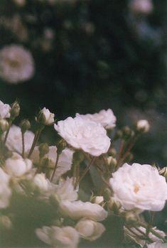 Dozing dreaming pretty things <3