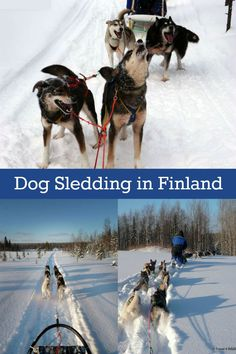 Dog Sledding in Finland //  A bucket list-worthy adventure on the Arctic Circle. Pin this story of a four-day dogsled tour in the wilds near Kuusamo, Finland. Winter adventures and things to do in Finland // Guest post by Cristina Garcia, Travel4Wildlife