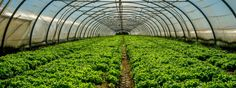 Emerging technologies are shaking up how we grow food, distribute it, and even what we're eating. We are seemingly on the cusp of a food revolution and undoubtedly, technologies including artificial intelligence will play a... read more