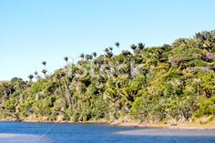 Kaihoka Lakes Scenic Reserve, Golden Bay, New Zealand Royalty Free Stock Photo Bay News, Kiwiana, Beach Photos, Image Now, Lakes, Wilderness, New Zealand, Coastal, National Parks