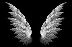 Image for Angel wings iphone wallpaper black and white Wings Wallpaper, Angel Wallpaper, 8k Wallpaper, Black Wallpaper Iphone, Cellphone Wallpaper, Screen Wallpaper, Mobile Wallpaper, Hd Wallpaper Android, Black Backgrounds