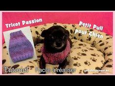Tutoriel Tricot: Petit Pull à tricoter pour chiens Chihuahuas, ou Yorkshires - YouTube