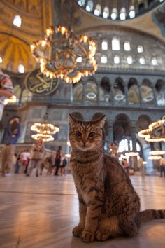 Discover the Historical Peninsula: 15 Places to See in Istanbul Animals And Pets, Cute Animals, Animals Images, Cats Tumblr, Photo Chat, Hagia Sophia, All About Cats, Beautiful Cats, Cat Memes