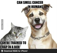 bahahaha! this is why I am a dog person! lol and people say cats are so much smarter than dogs... pshhhh!