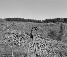 "Robert Adams, ""Stacking the de-limbed trunks of an immature 'harvest,' Columbia County, Oregon,"" 1999-2003."
