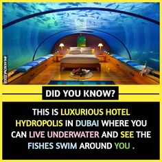 Always Interesting and Amazing Fact surprise us and come with great knowledge that helps in day to day help. So we come with a series of Fact to boost your knowledge. Some Amazing Facts, True Interesting Facts, Interesting Facts About World, Intresting Facts, Unbelievable Facts, Wierd Facts, Wow Facts, Wtf Fun Facts, Strange Facts
