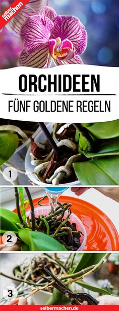 The five golden rules of orchid care-Die fünf goldenen Regeln der Orchideen-Pflege Elegant orchids with bright flowers – just a dream ? This way, no mistakes will happen to you when caring for your orchid! Bright Flowers, Exotic Flowers, Hair Rainbow, Flower Drawing Images, Orchid Care, Flower Aesthetic, Flower Wallpaper, Red Roses, Flower Power